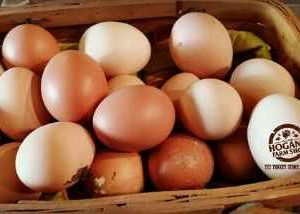 Tasty Farm Fresh Eggs